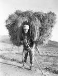 Korean War   Industry  Farming